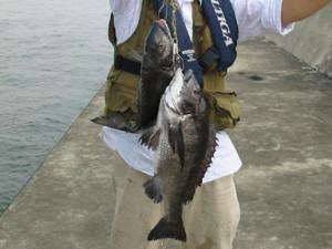 2005年7月18日黒鯛49センチ