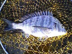 2005-8-27-yoichinu1